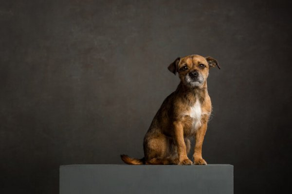 Fine Art Pet Photography